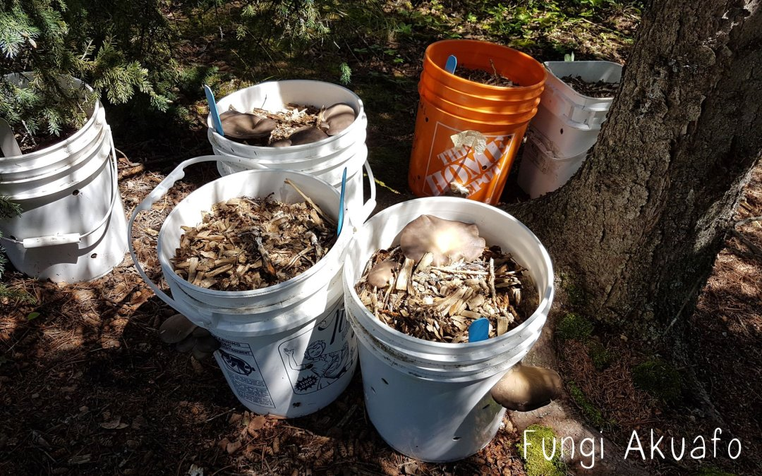 Wood Chip Buckets