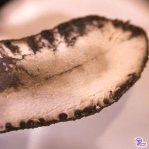Xylaria polymorpha inside