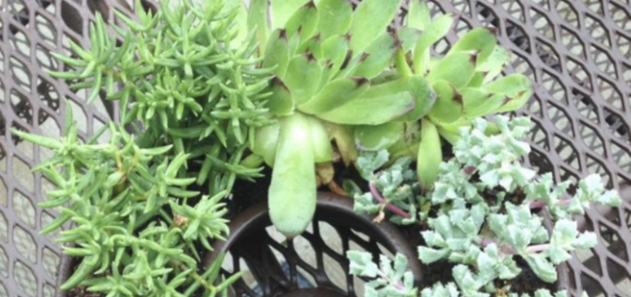 Use rustoleum paint to upcycle a jello mold and make it into your DIY succulent planter. Fits right on your patio table and has room for an umbrella.