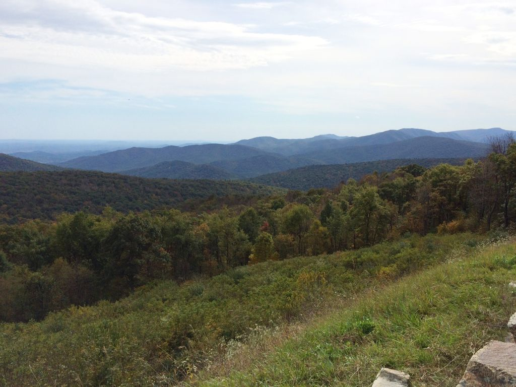 riverbend park fairfax va with Skyline Drive Foliage Check on Skyline Drive Foliage Check also Mimus 20polyglottos moreover July 4th Weekend 2016 Northern Virginia further Wild And Wonderful Virginia Bluebells At Riverbend Park besides 8 Great Things To Do In Great Falls Virginia.