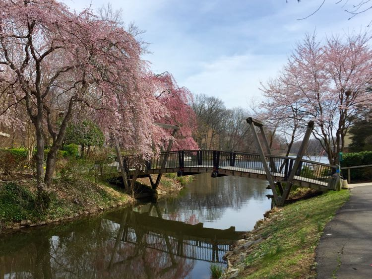 The 6 Best Places To See Cherry Blossoms In Virginia In