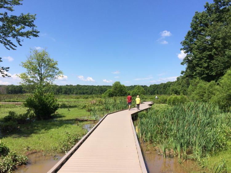 Huntley Meadows, a Northern Virginia hidden gem