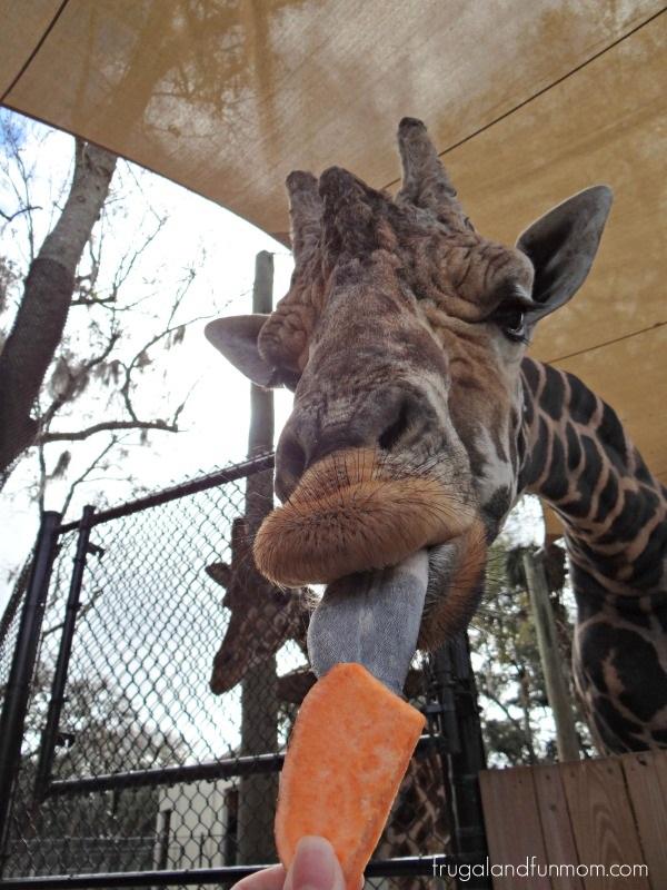 Attractive Central Florida Zoo Botanical Gardens Sanford Fl