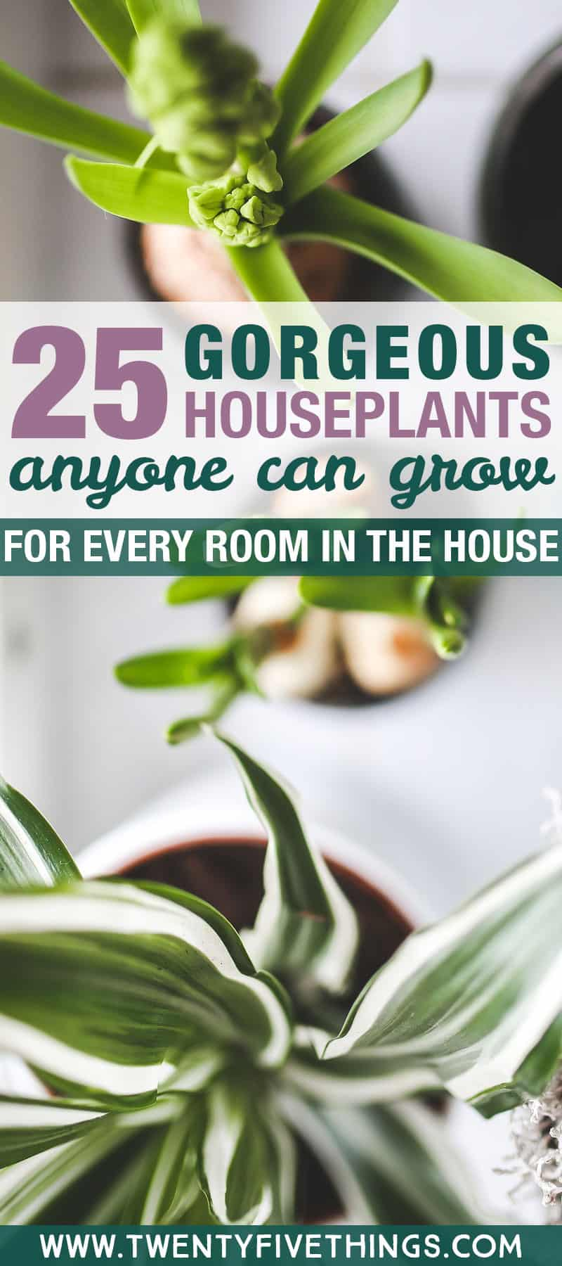 Indoor houseplant guide for every room in the house. Good low-light houseplants, and edible plants you can grow indoors. Lots of ideas for easy to grow houseplants.