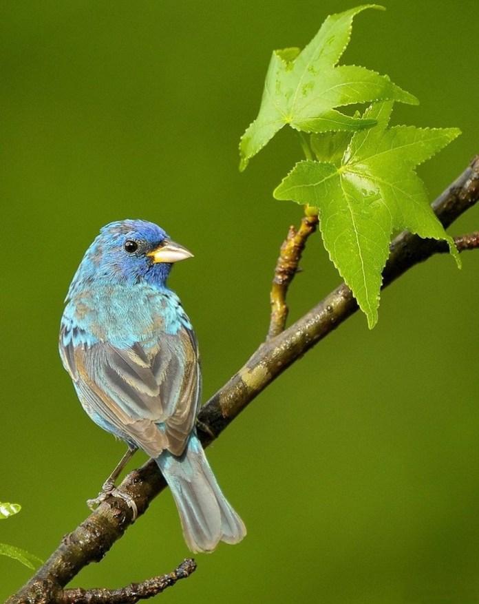 colorful bird (8)