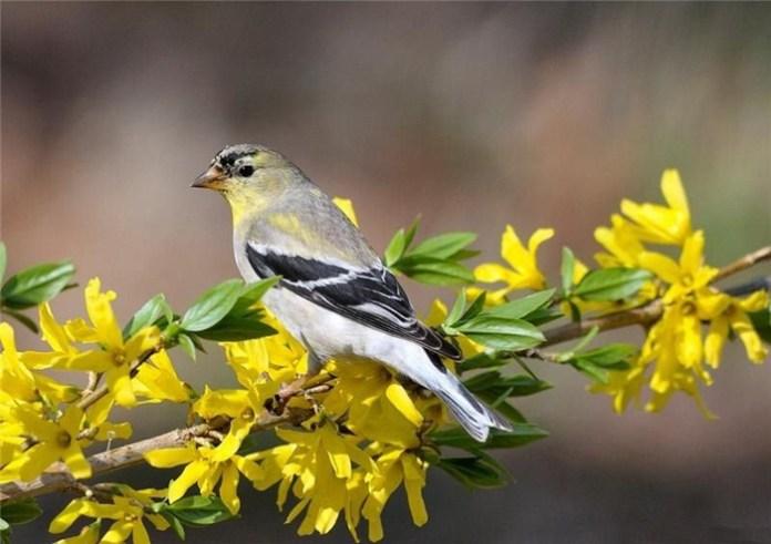 colorful bird (15)