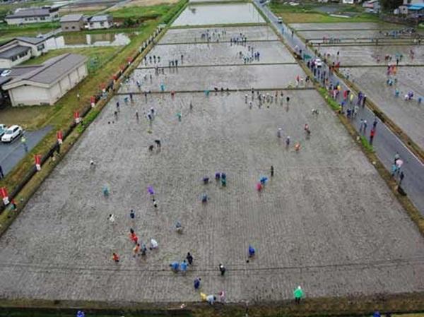 rice paddy art (1)