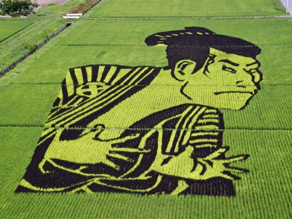 rice paddy art (7)