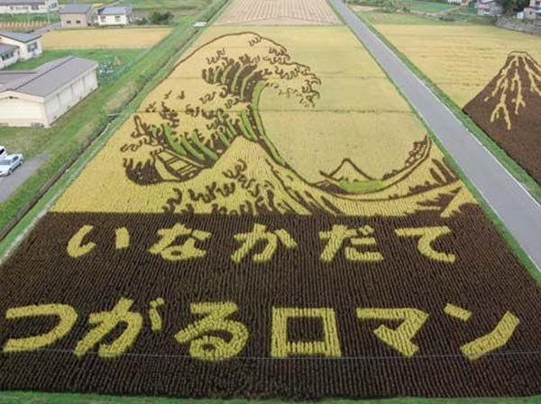 rice paddy art (8)