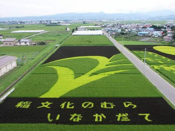 rice paddy art (13)