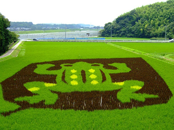 rice paddy art (20)