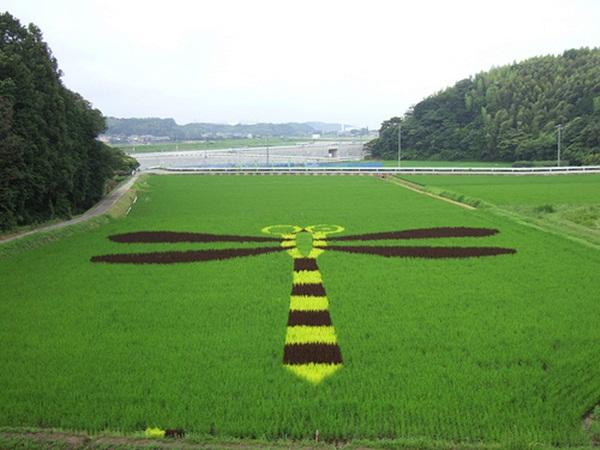 rice paddy art (21)