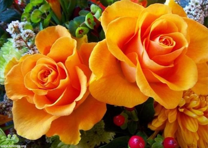 beautiful-roses-03