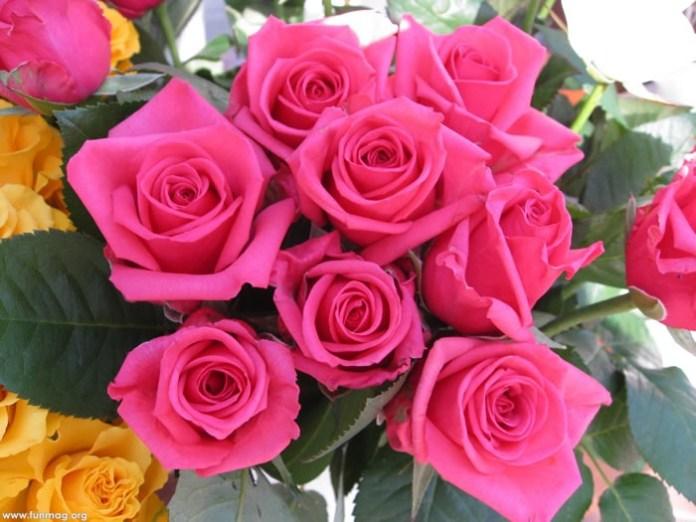 beautiful-roses-10