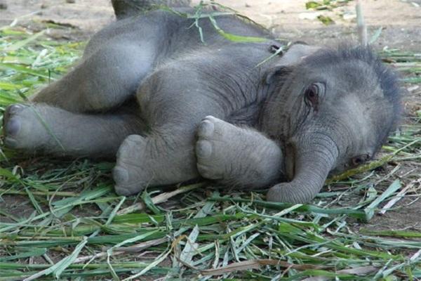 cute-baby-animals- (6)
