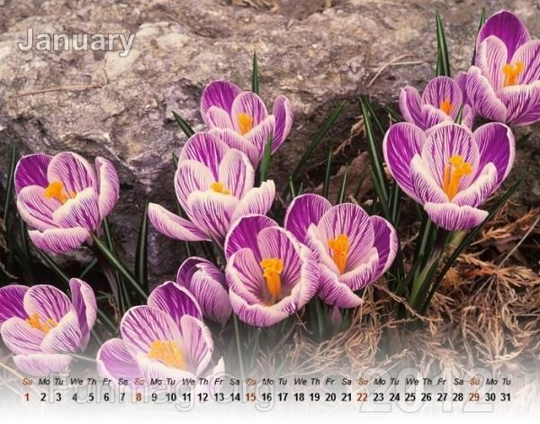 flower-calendar-01