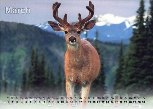 animals-calendar- (3)