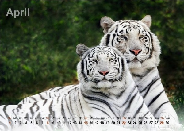 animals-calendar- (4)