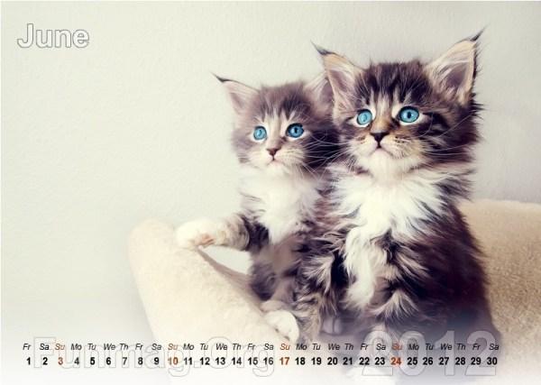 animals-calendar- (6)