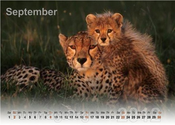 animals-calendar- (9)