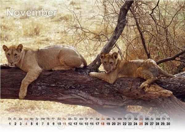 animals-calendar- (11)