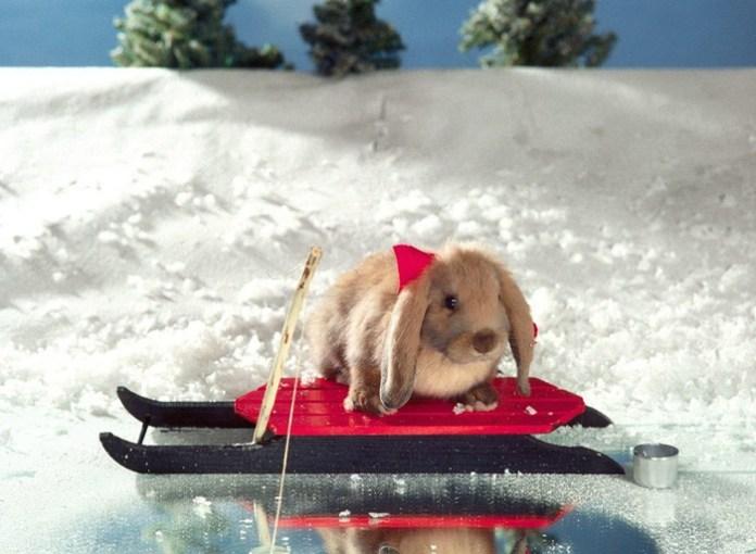 cute-rabbit- (5)