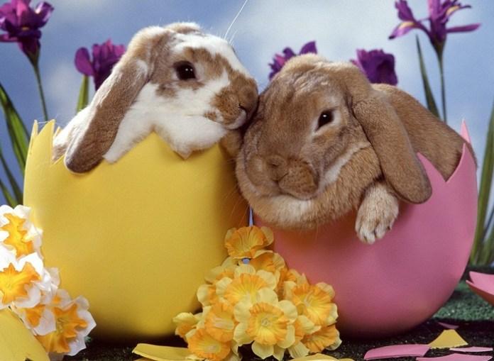 cute-rabbit- (7)