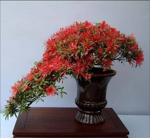 flower-bonsai-tree- (4)