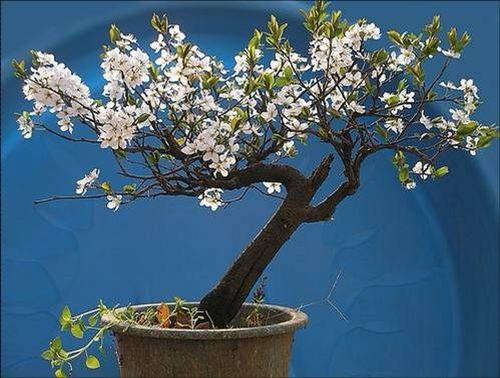 flower-bonsai-tree- (19)