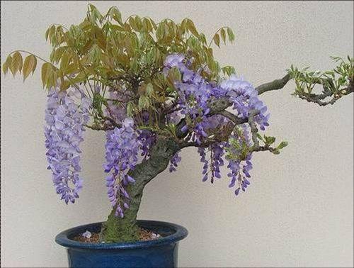 flower-bonsai-tree- (21)