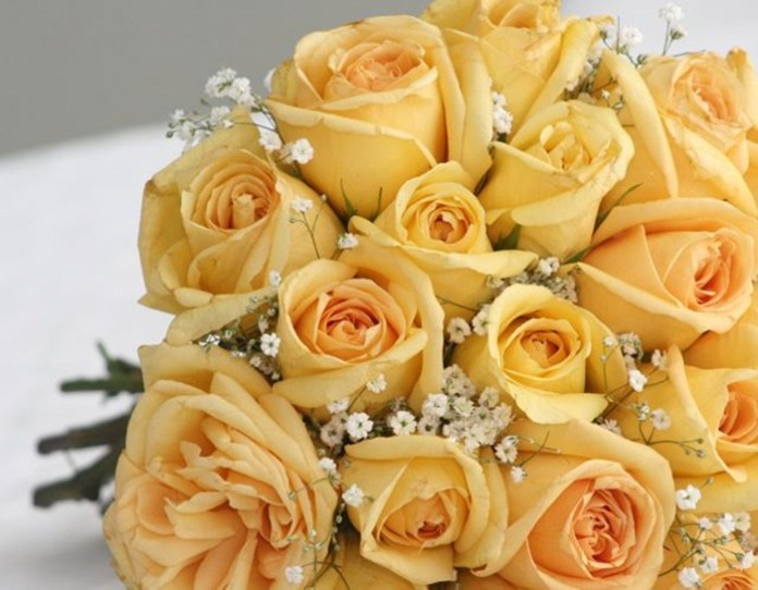 picture-of-yellow-roses- (1)
