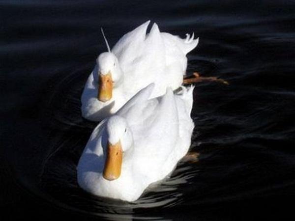 twin-animals- (2)