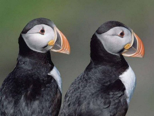 twin-animals- (3)