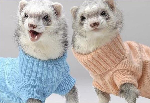 twin-animals- (5)