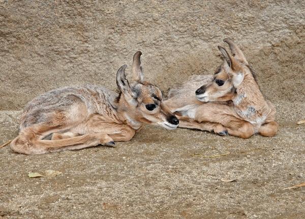 twin-animals- (7)