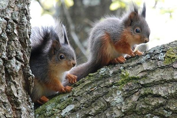 twin-animals- (9)