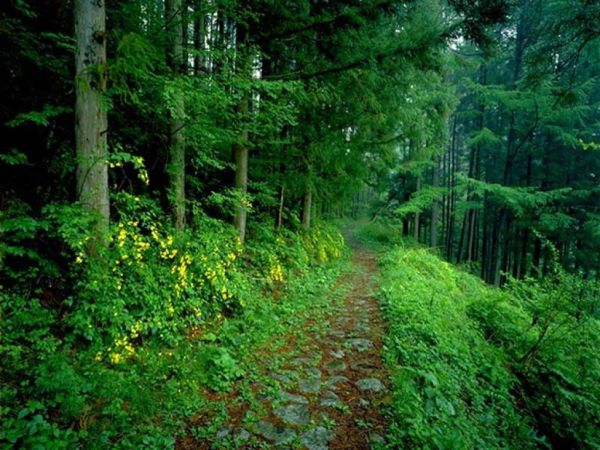 beautiful-nature-wallpapers- (8)