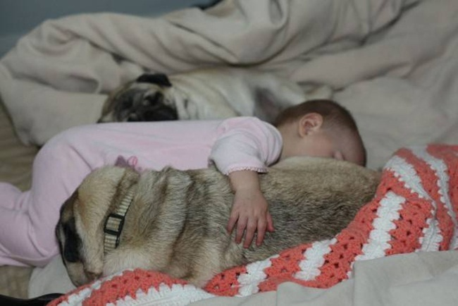 cute-babies-with-dogs- (1)