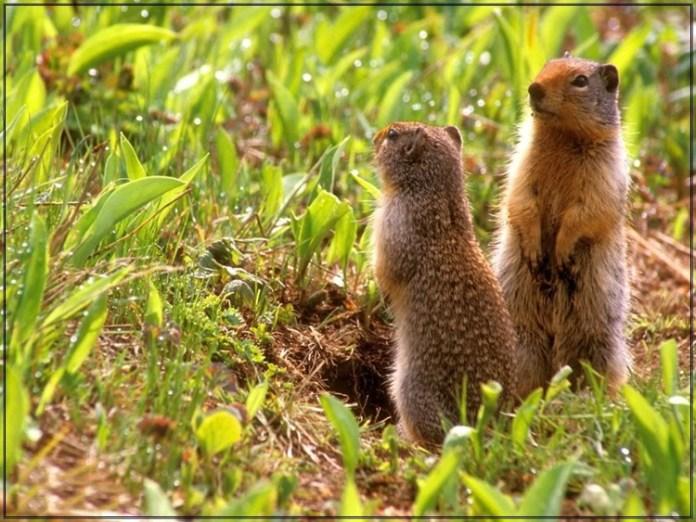 wildlife-photos- (6)