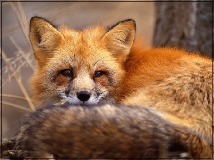 wildlife-photos- (7)