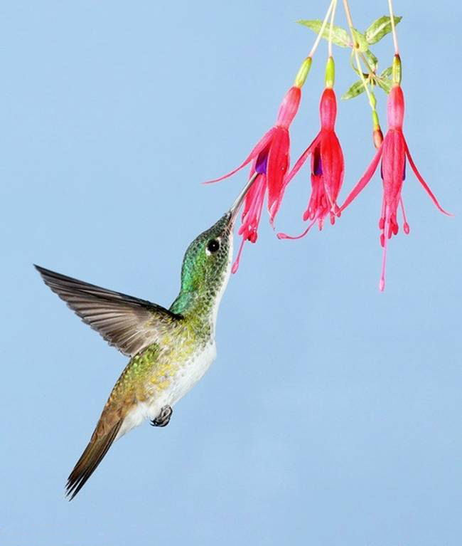 colorful-hummingbirds- (2)