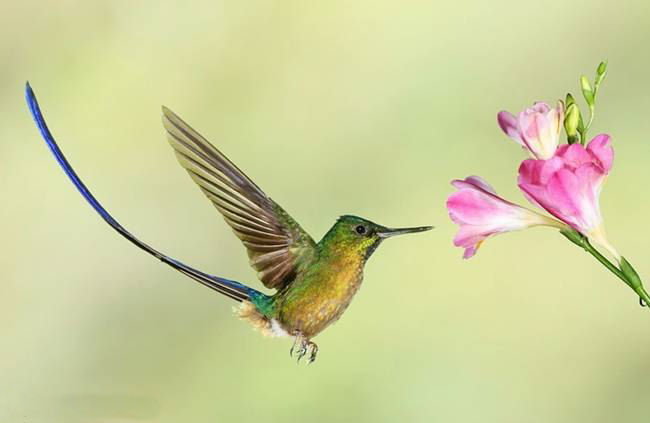 colorful-hummingbirds- (25)