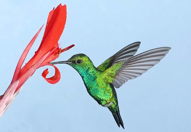 colorful-hummingbirds- (28)