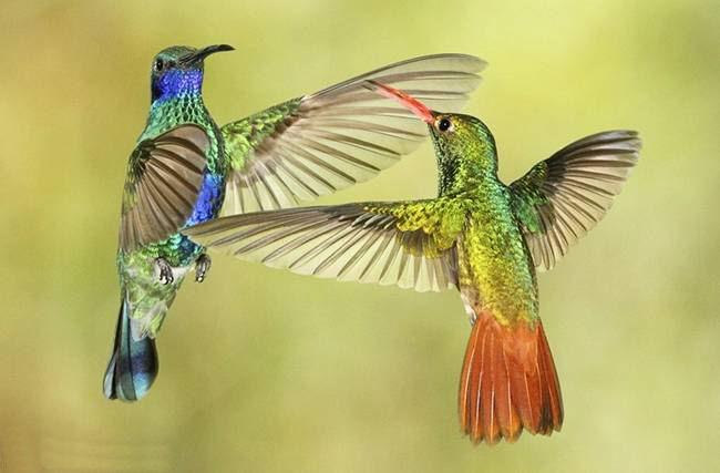 colorful-hummingbirds- (31)