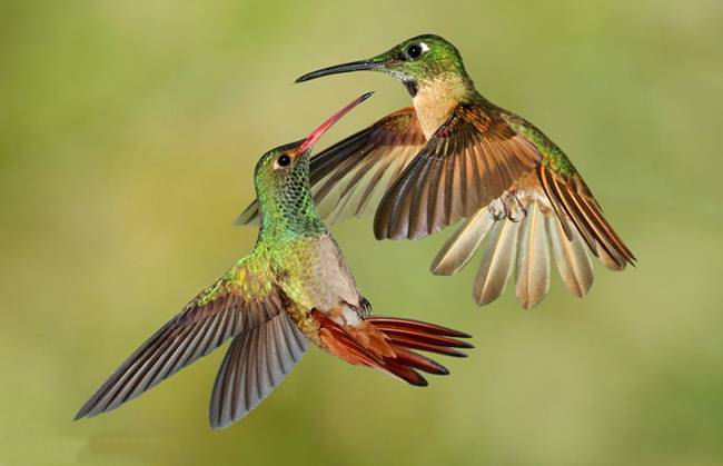 colorful-hummingbirds- (4)