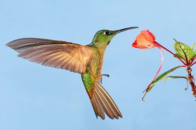 colorful-hummingbirds- (6)