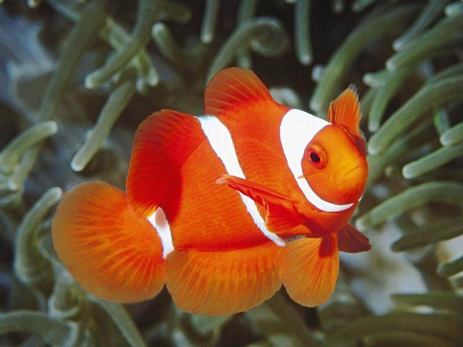 colorful-tropical-fishes- (8)