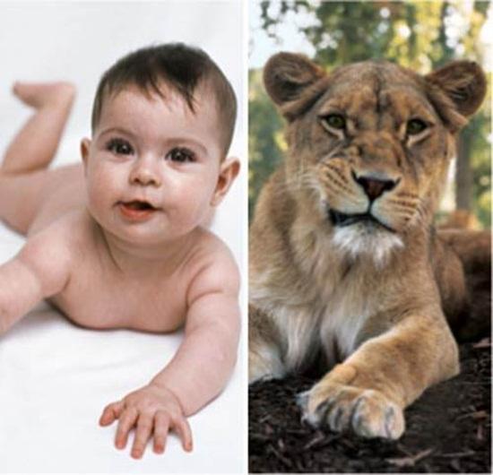 cute-babies-poses-alike-animals-babies- (11)