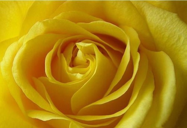 life-in-yellow-color- (4)