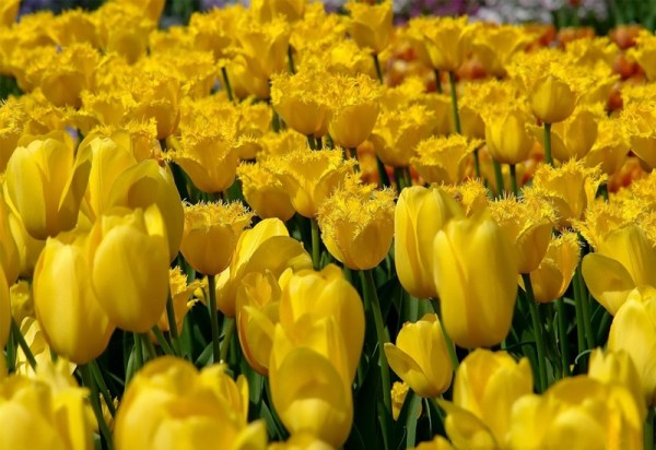 life-in-yellow-color- (5)